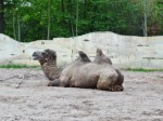 Zoo dAmnéville 13 mai 2013